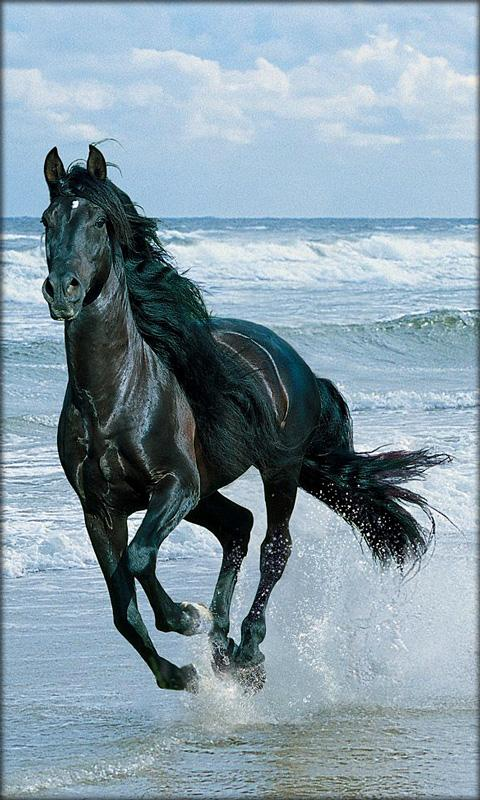 Live Horse Wallpapers For Pc Wallpapersafari