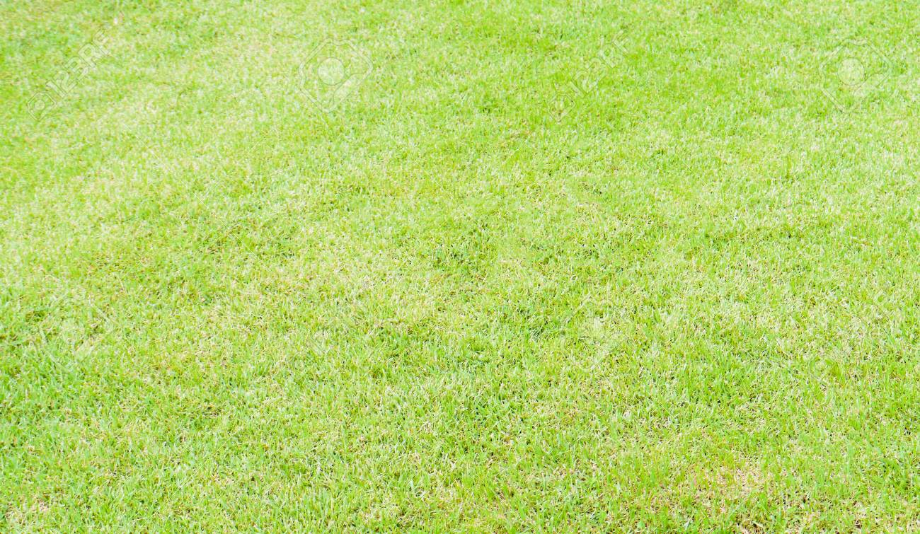 Art Texture Green Lawn Background Stock Photo Picture And 1300x755