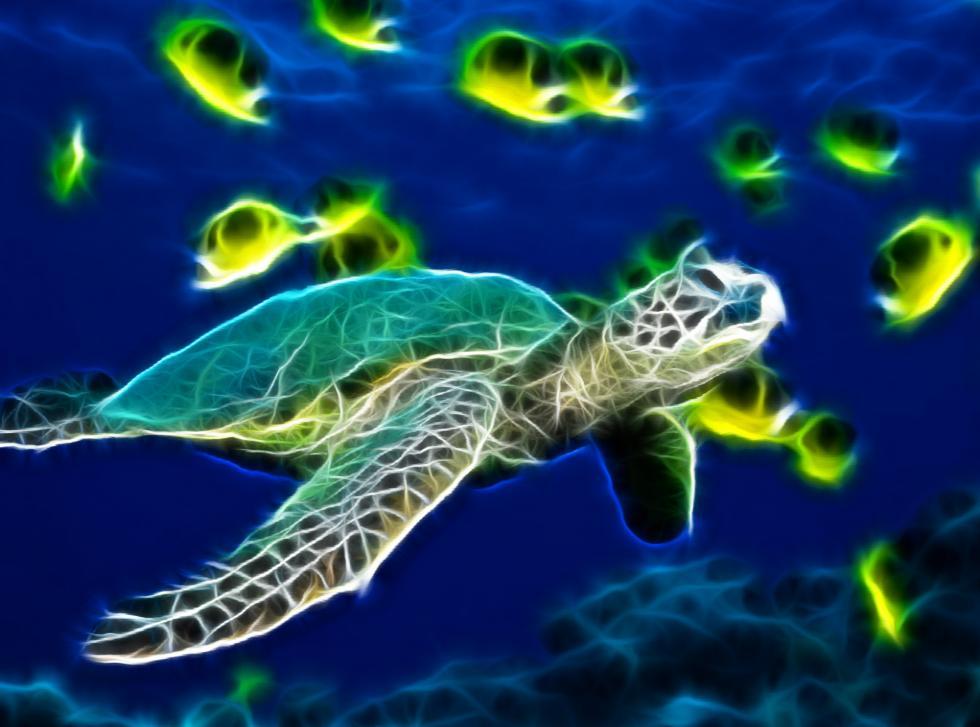 Download Sea Turtle Animated Wallpaper DesktopAnimatedcom 980x727