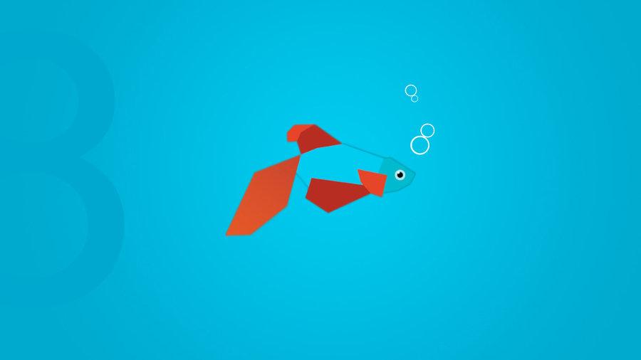 Beta Fish Wallpaper Windows 8 beta by bswas 900x506