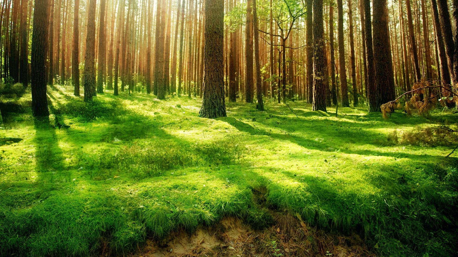 Beautiful Forest Green Wallpaper HD 510 Wallpaper High Resolution 1920x1080