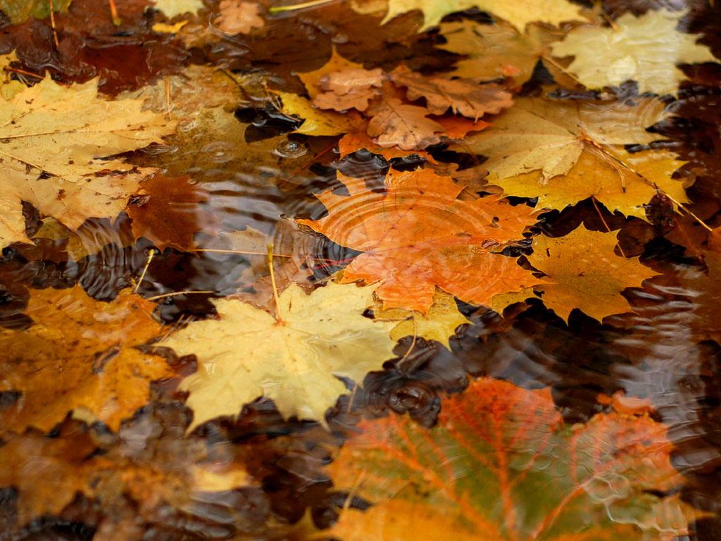 Autumn Desktop Backgrounds Windows 7 Autumn PhotosWindows 7 Autumn 1024x768