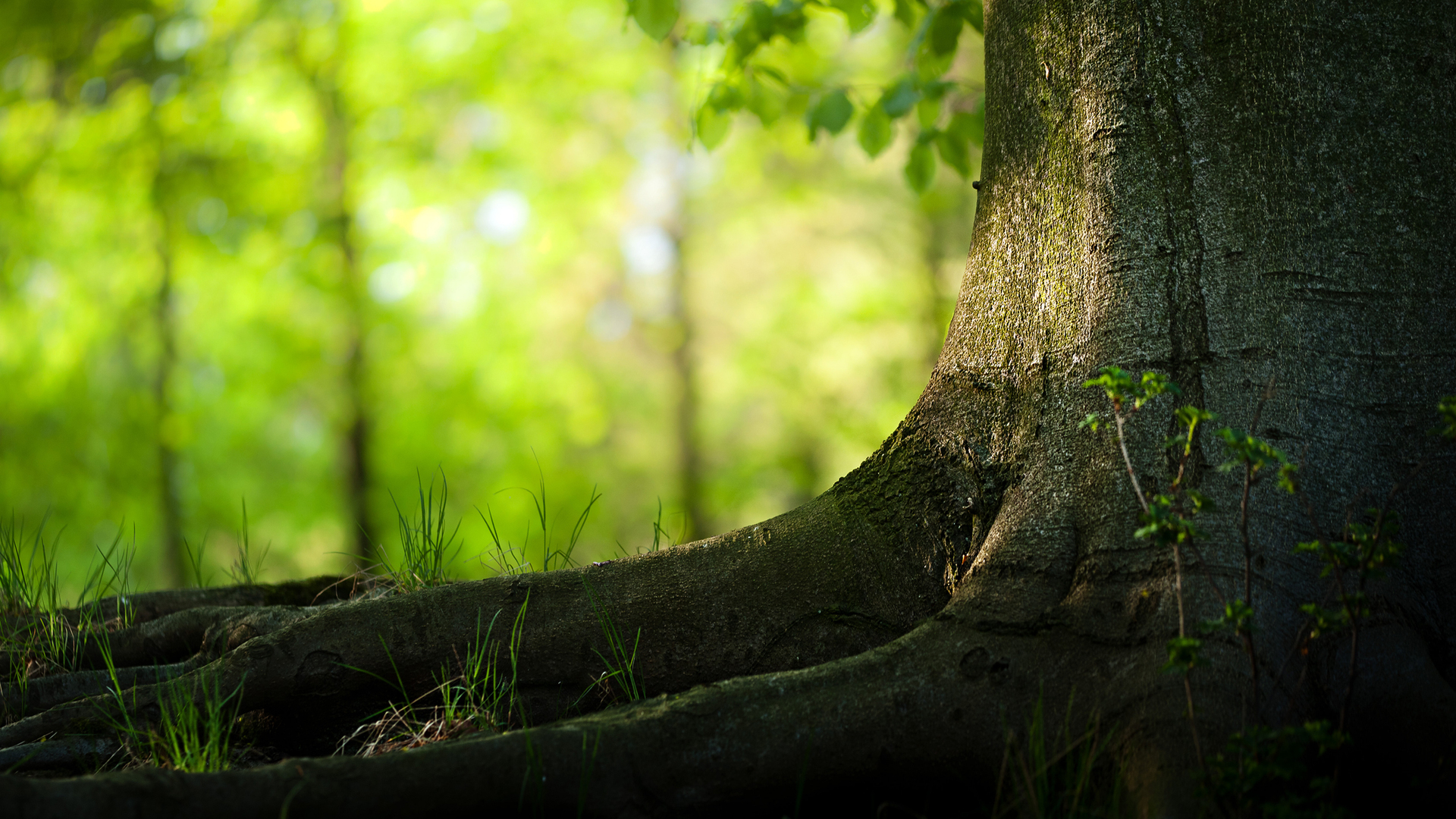 Nature Tree hd Desktop Backgrounds 1920x1080