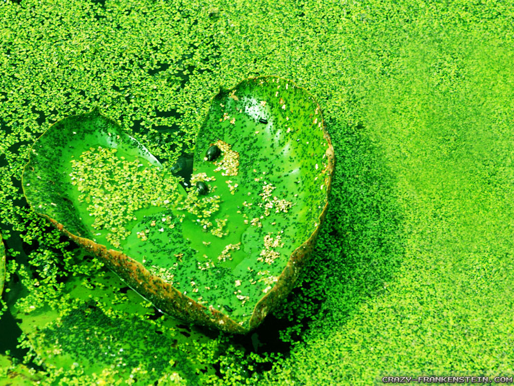 Nature Love Wallpaper Hd: Nature Love Wallpaper
