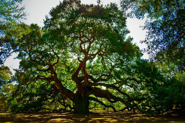 Nothing found for 2008 Angel Oak Tree 2 Angle Oak 1240x827