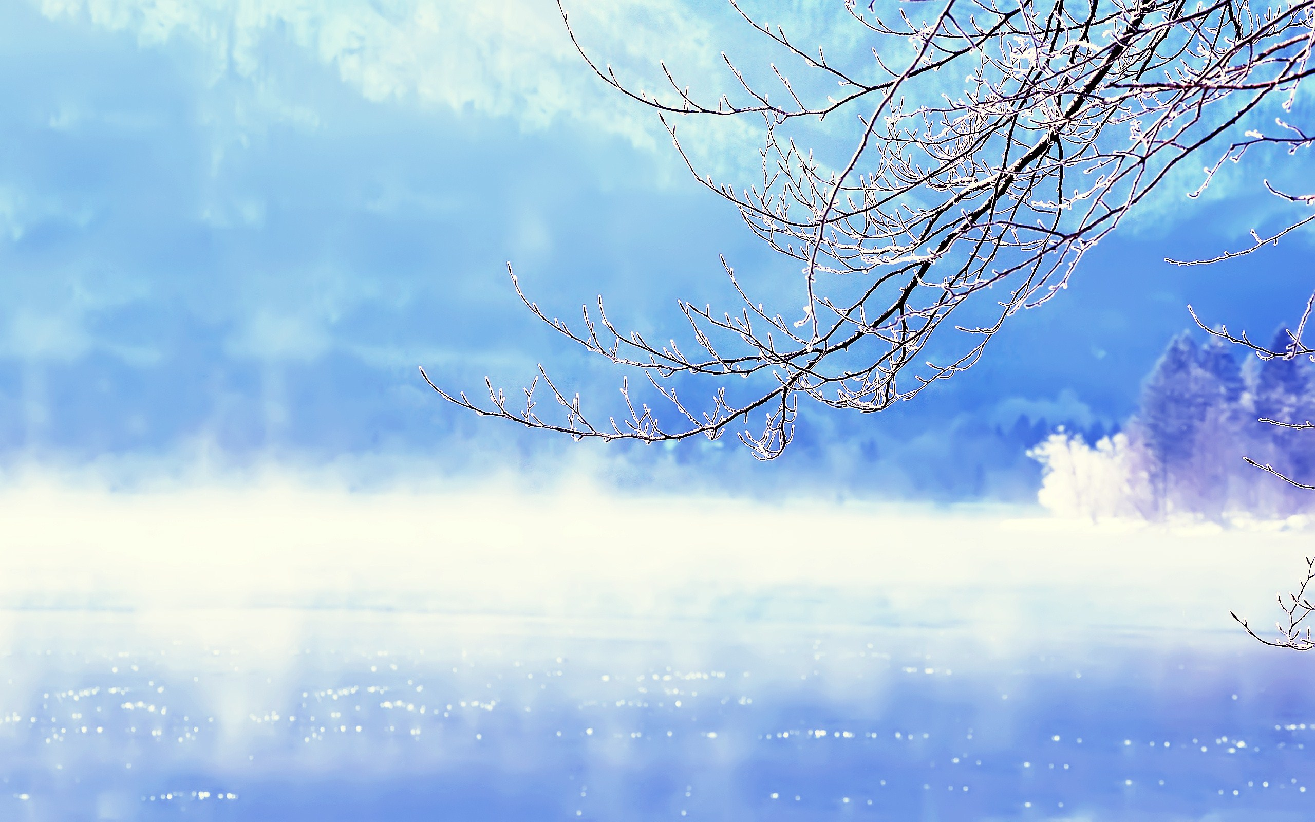 Beautiful Winter Background   Wallpaper High Definition High Quality 2560x1600