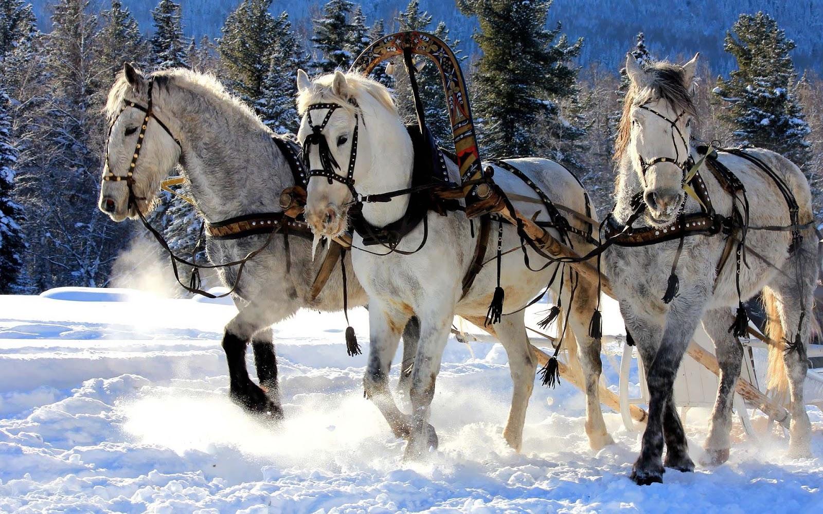 обои для рабочего стола зимние лошади № 465229 без смс