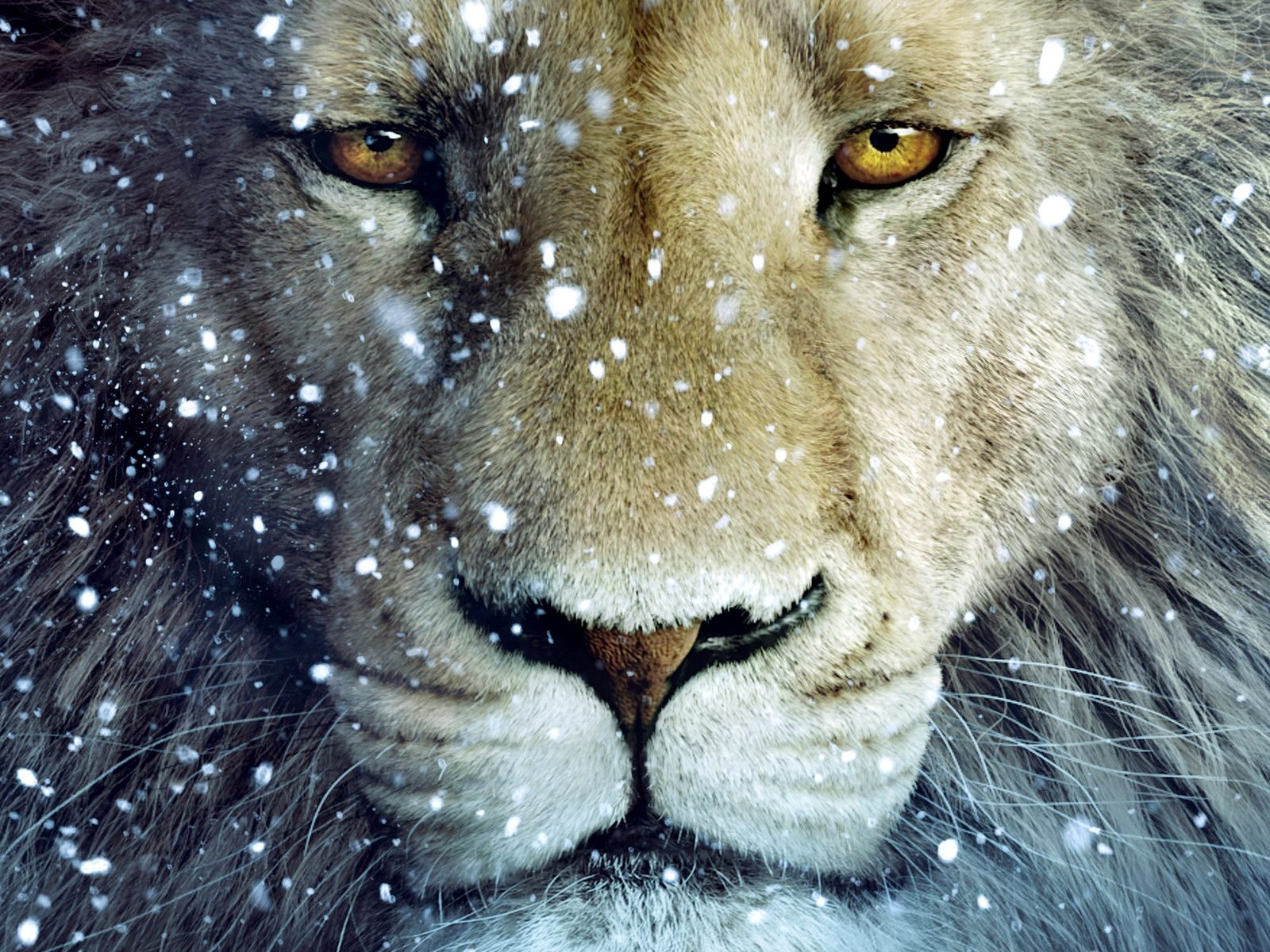 Lion wallpapers for ipad Funny Animal 1600x1200