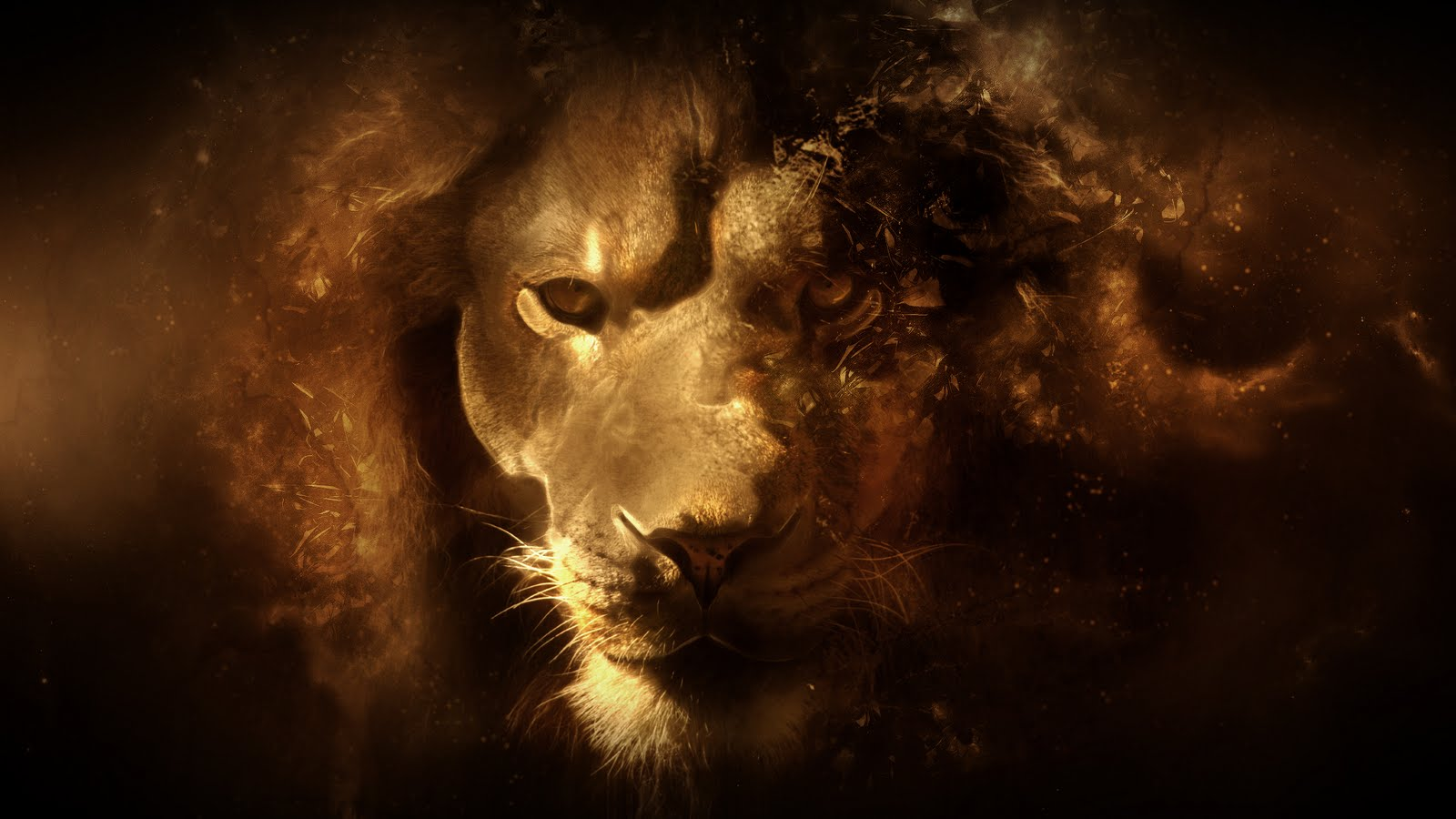 Lion HD Wallpaper 1600x900