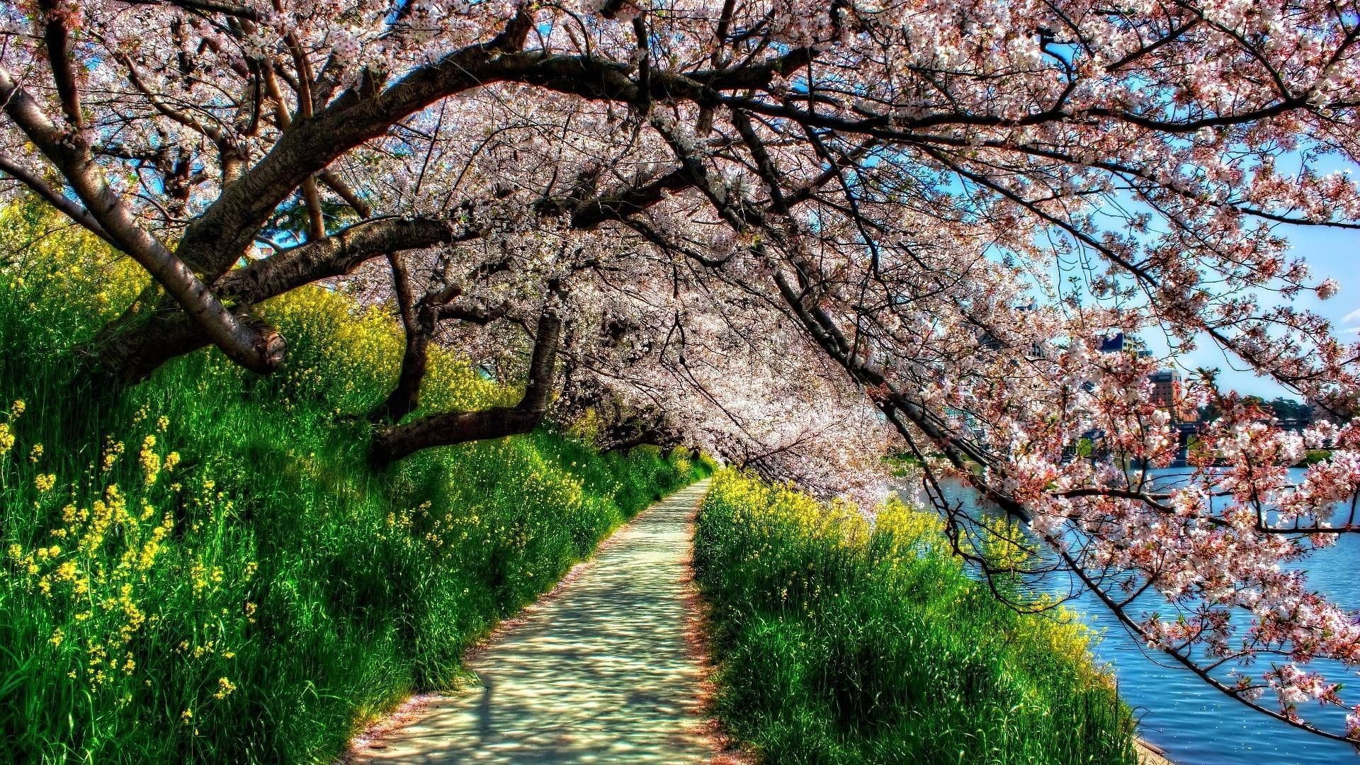 64 Hd Spring Wallpapers on WallpaperPlay 1920x1080