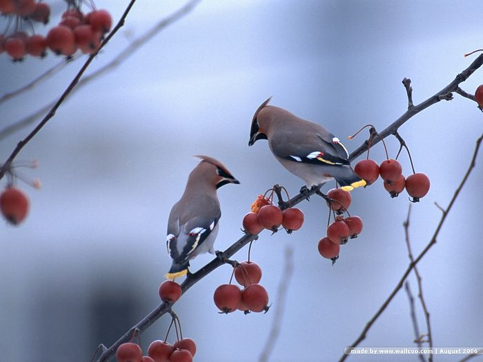 Birds in Winter Vol4   Birds Variety   Lovely Little Bird Wallpaper 700x525