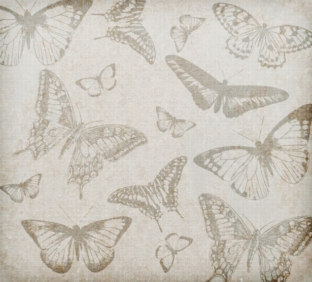 Butterfly Background Vintage Stock Photo   Public Domain Pictures 615x557