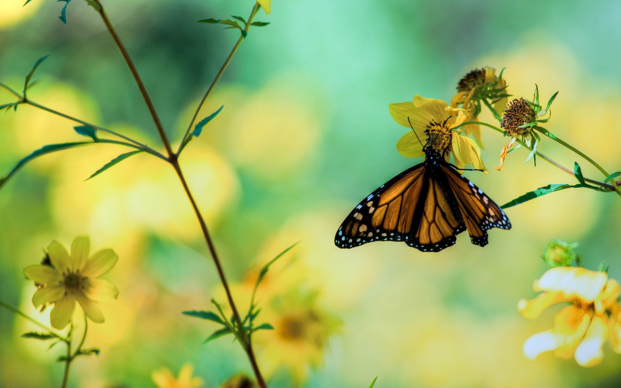 Daily Wallpaper Butterfly Garden I Like To Waste My Time 2560x1600