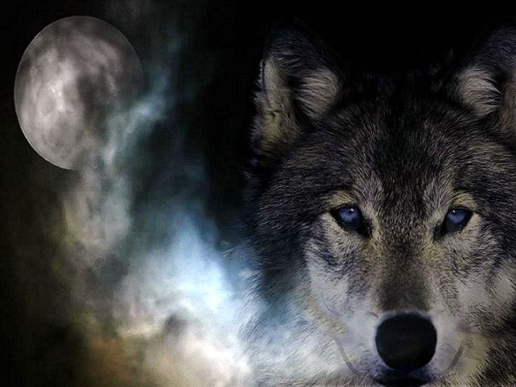 Free Wolves Screensavers And Wallpaper