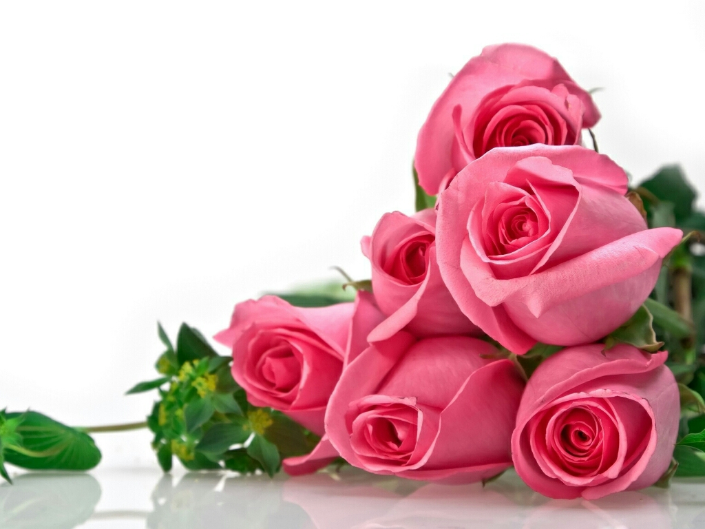 flowers for flower lovers Flowers wallpapers beautiful roses 1024x768