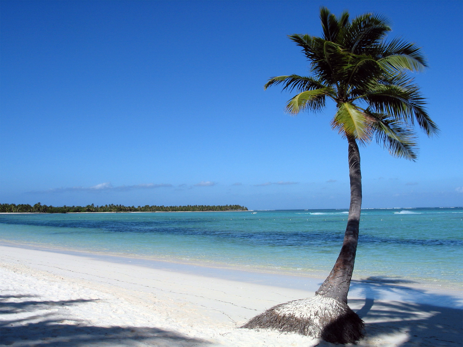 HD Pictures Of Palm Trees Wallpapers and Photos HD Beach Wallpapers 1600x1200