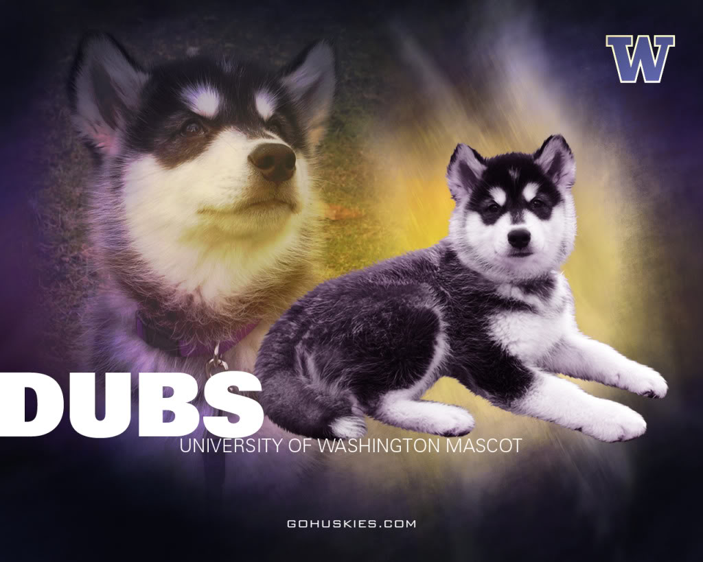 UDUB Huskies Wallpaper Background Theme Desktop 1024x819