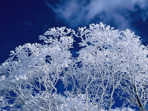 free frozen tree wallpapers enjoy frozen tree wallpapers for your 500x375