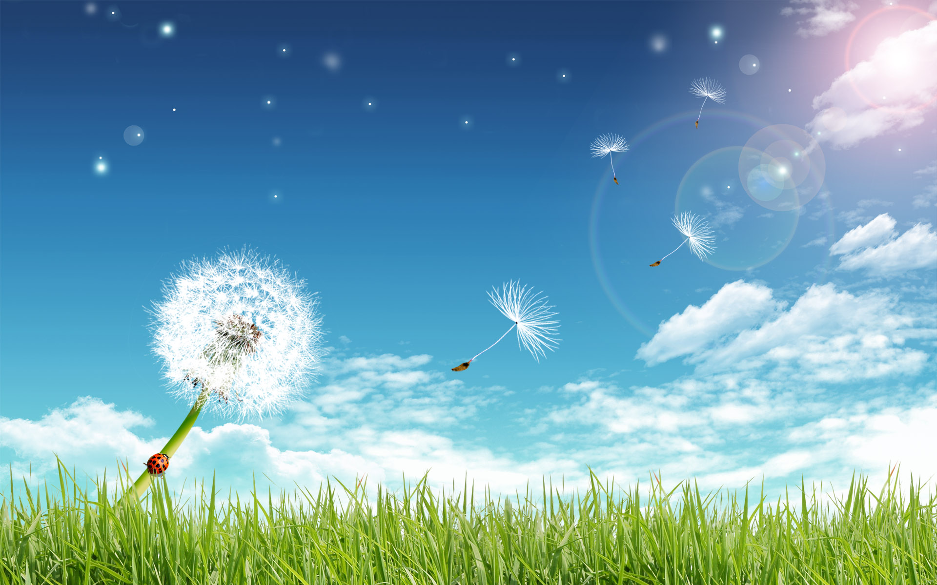 dandelion desktop wallpaper 1920x1200