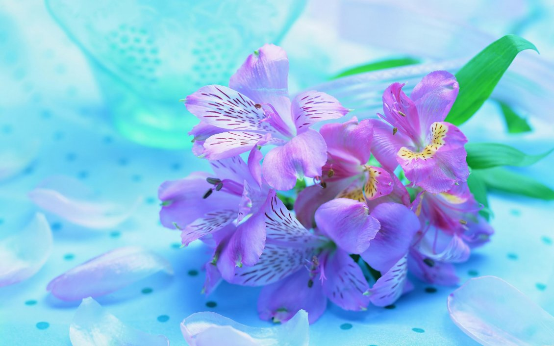 Purple spring flowers   beautiful HD wallpaper 1130x706