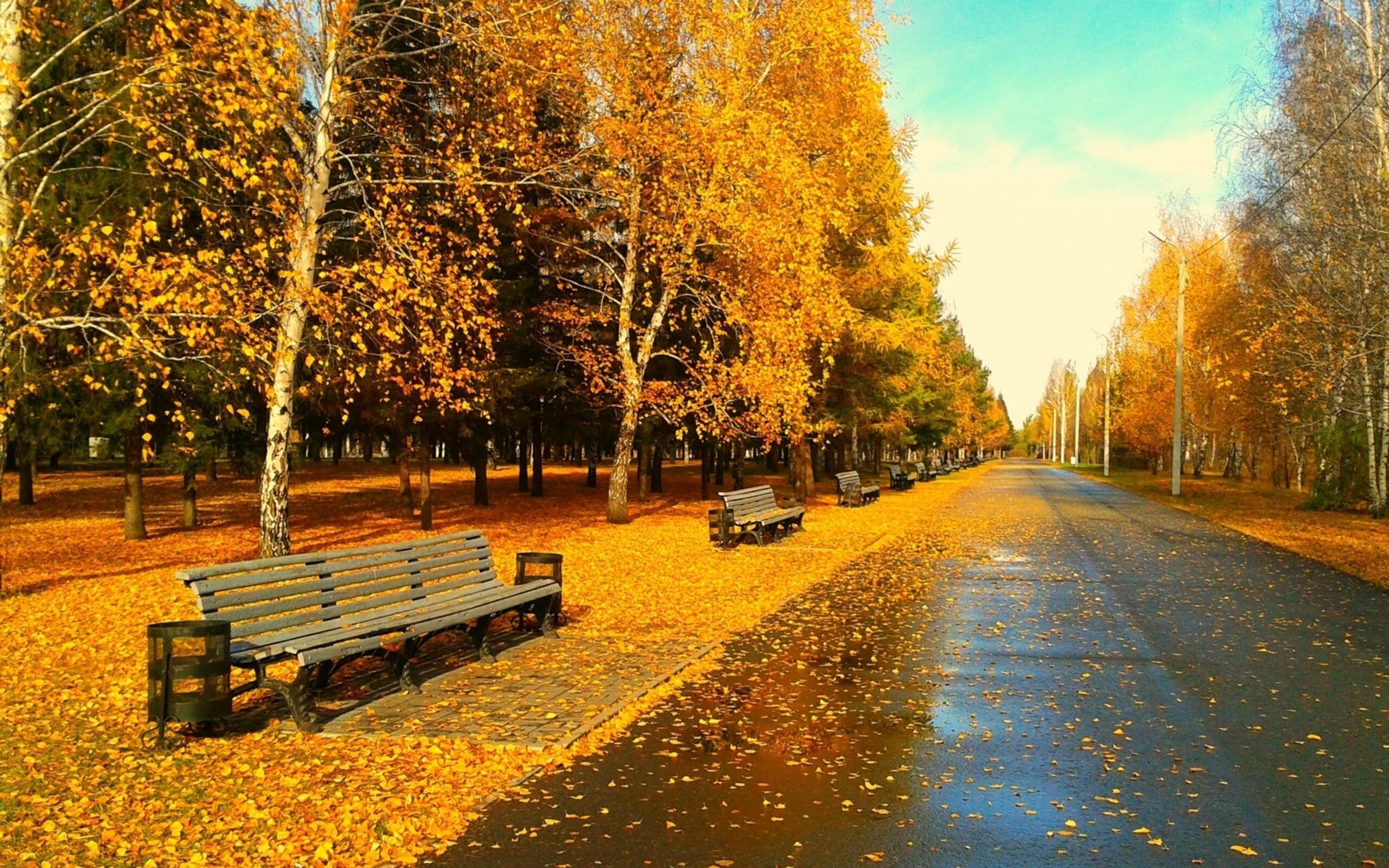 Sunny Autumn Day wallpapers Sunny Autumn Day stock photos 2560x1600
