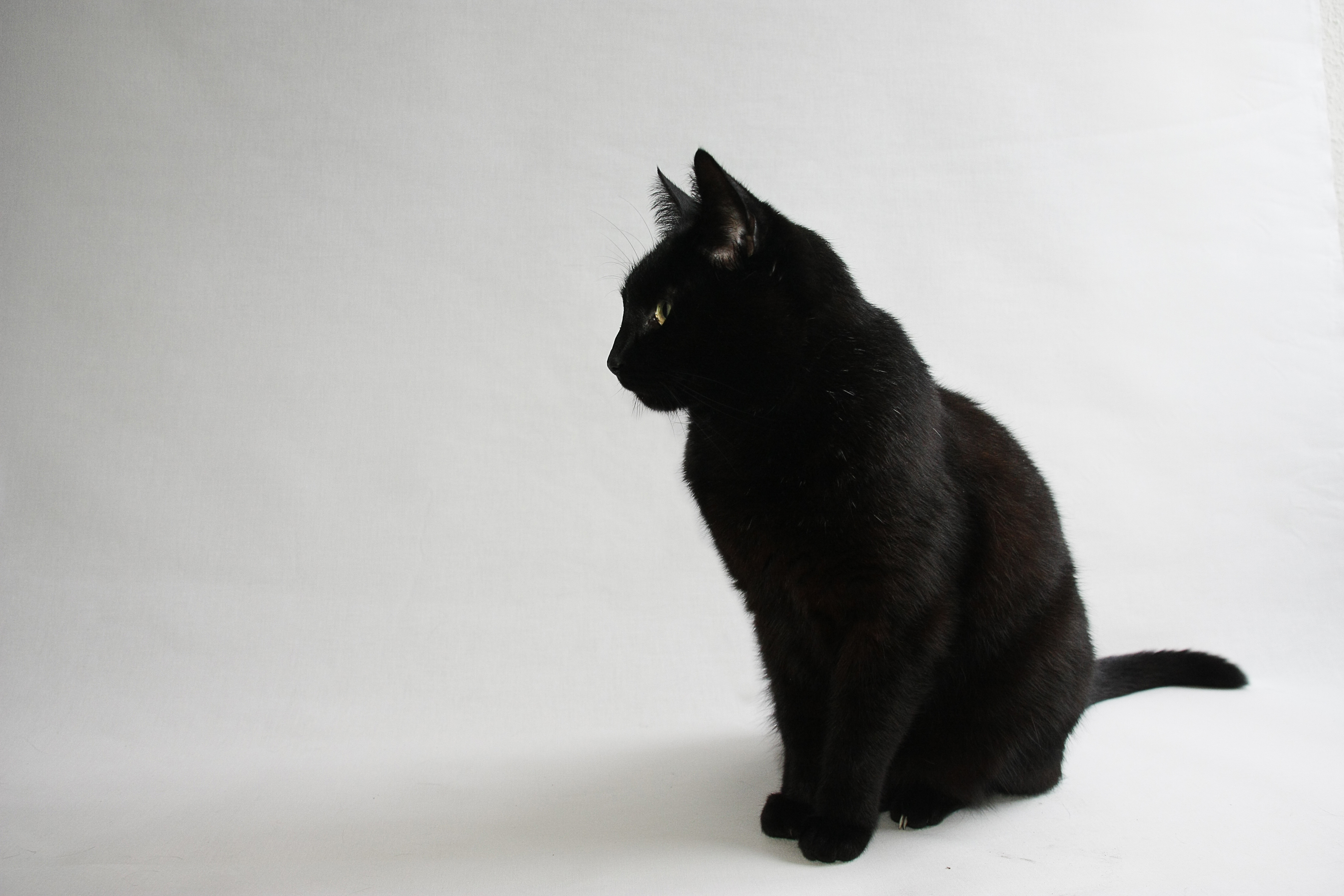 Black Cat Mke