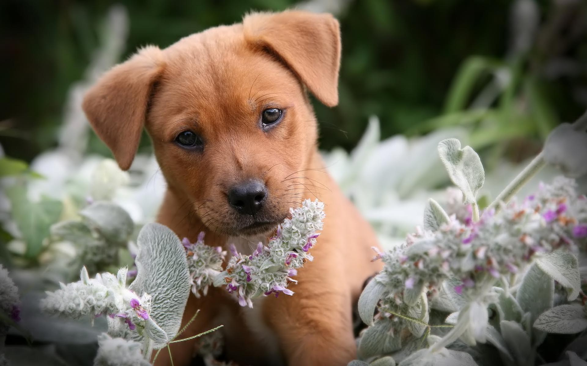 Funny Puppy animal hd Wallpaper High Quality Wallpapers 1920x1200