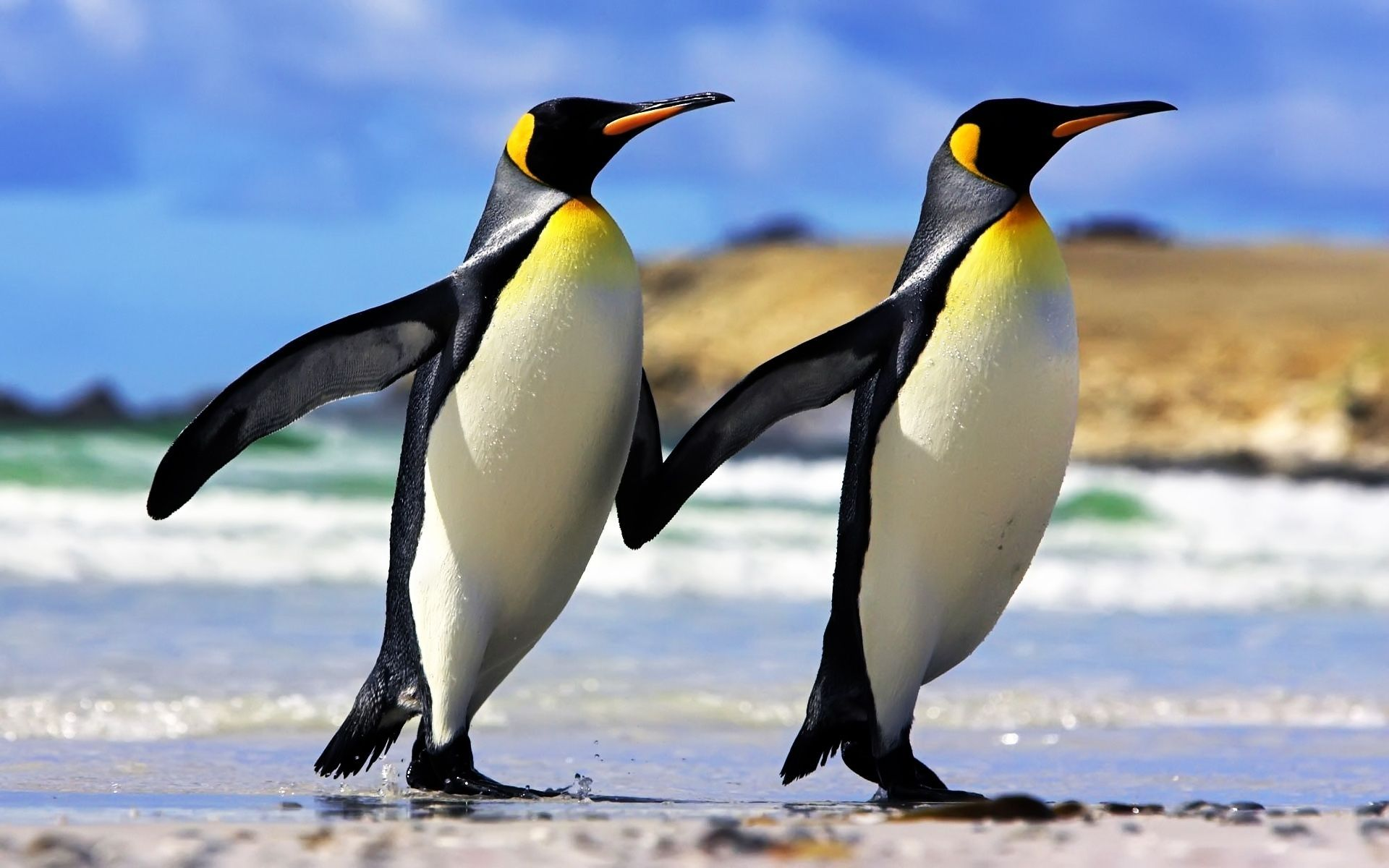 Emperor penguin Penguin Wallpaper Emperor Penguins 1920x1200px 1920x1200