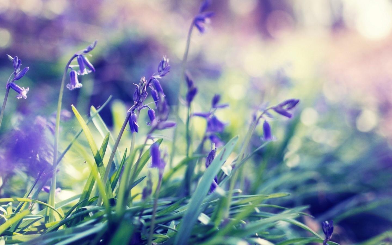 1440x900 Purple Spring Flowers desktop PC and Mac wallpaper 1440x900