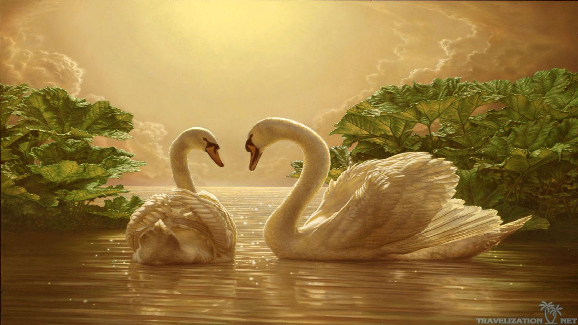 Download Beautiful Love Swan Wallpaper Full HD Wallpapers 1920x1080