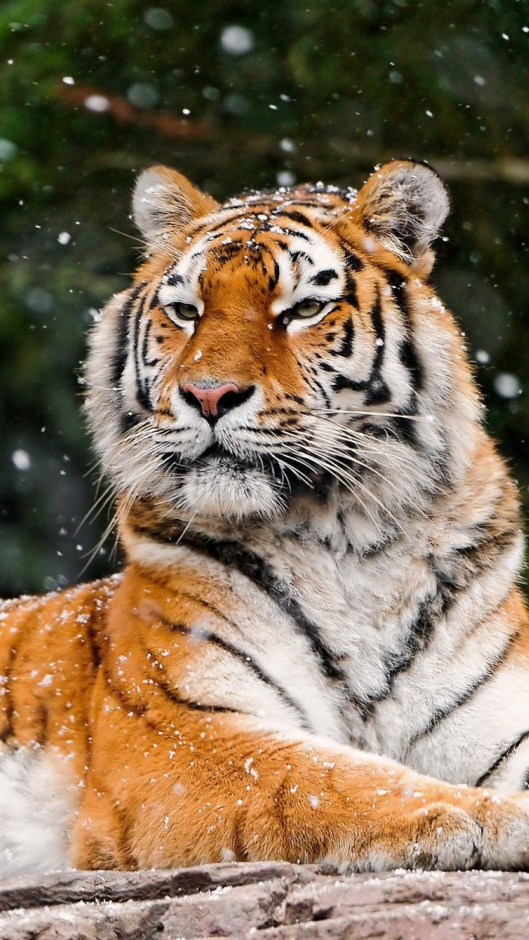 смесовое термобелье картинки для телефона тигры Thermo-Soft рассчитано для