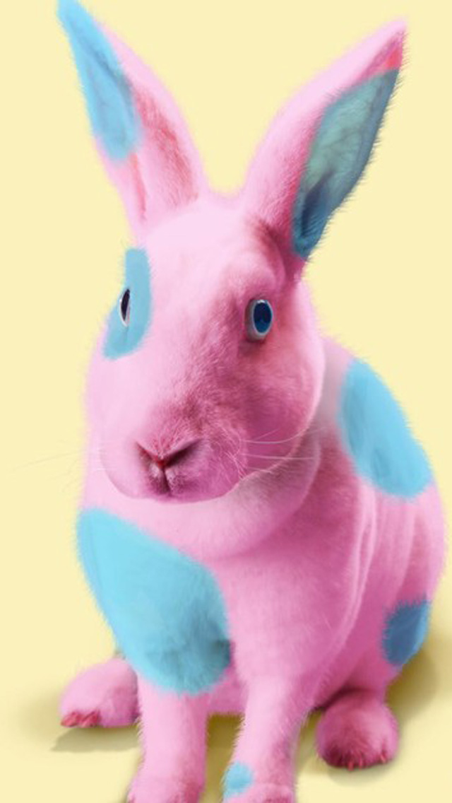 Cute Easter Bunny HD Wallpapers for iPhone 5 640x1136