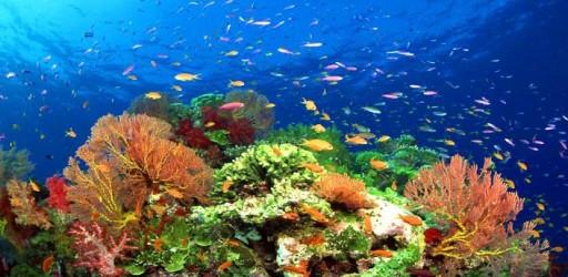 Fish Swimming Live Wallpaper 512x250