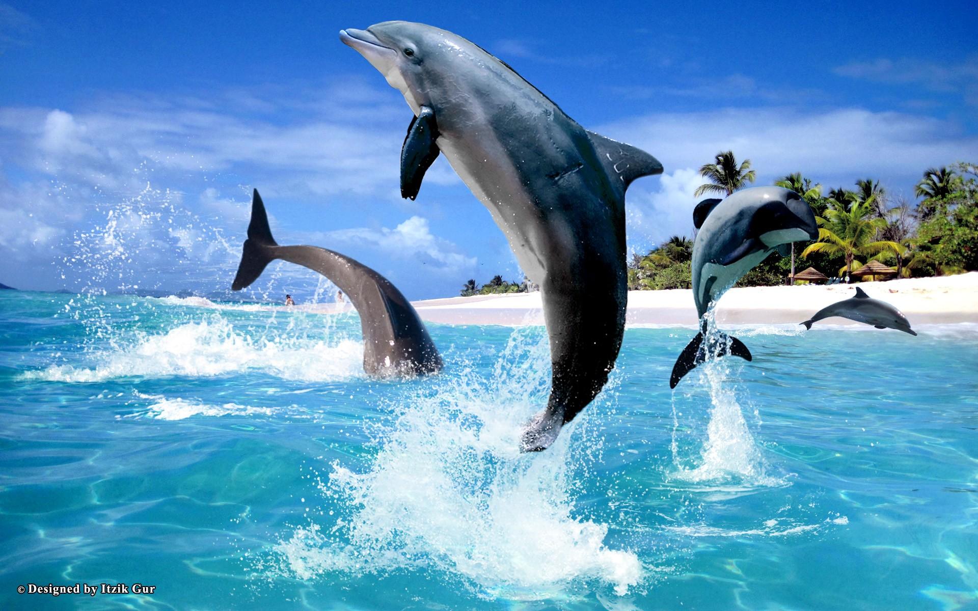 3d desktop wallpaper dolphins www wallpapers in hd com