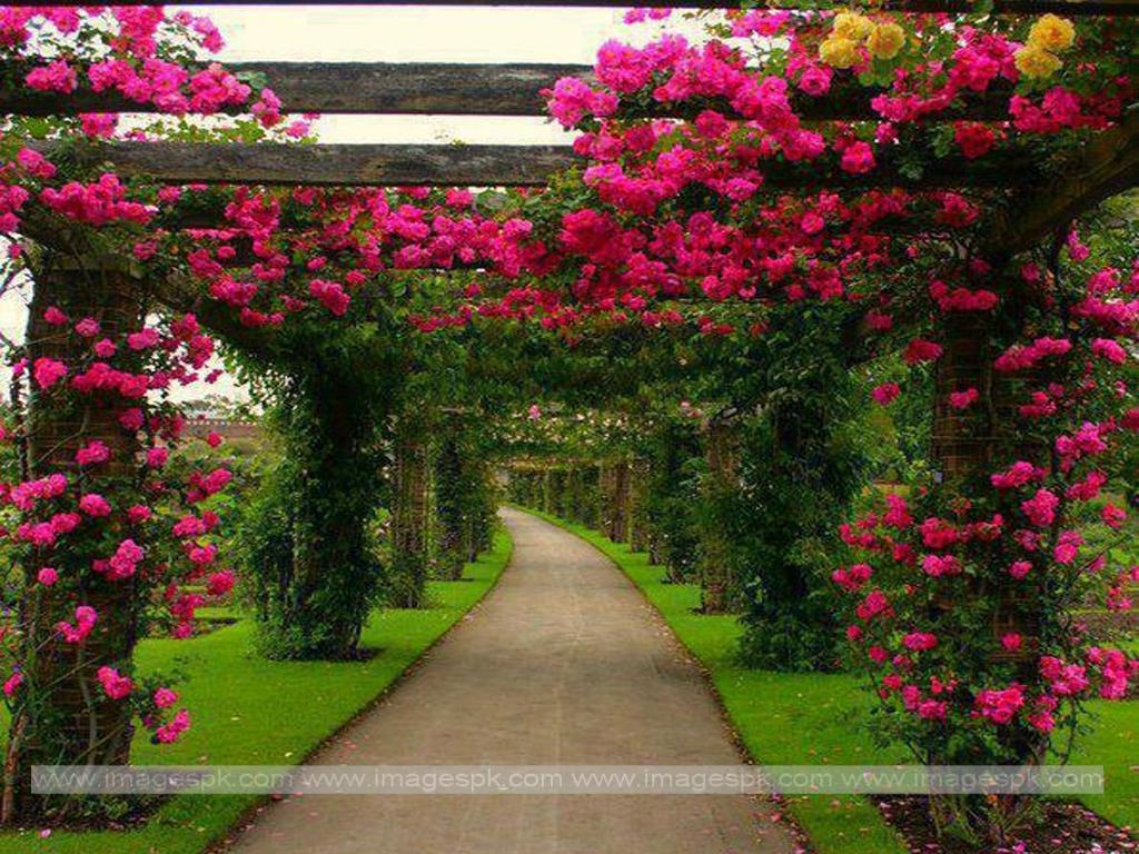 Free Download Beautiful Flower Garden Imagespkcom 1024x768 For