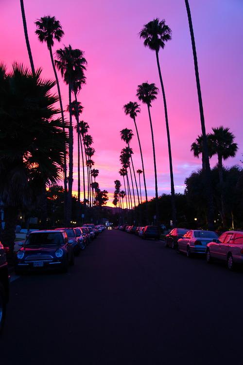 me beautiful pink california amazing palm trees sunsets santa monica d 500x750