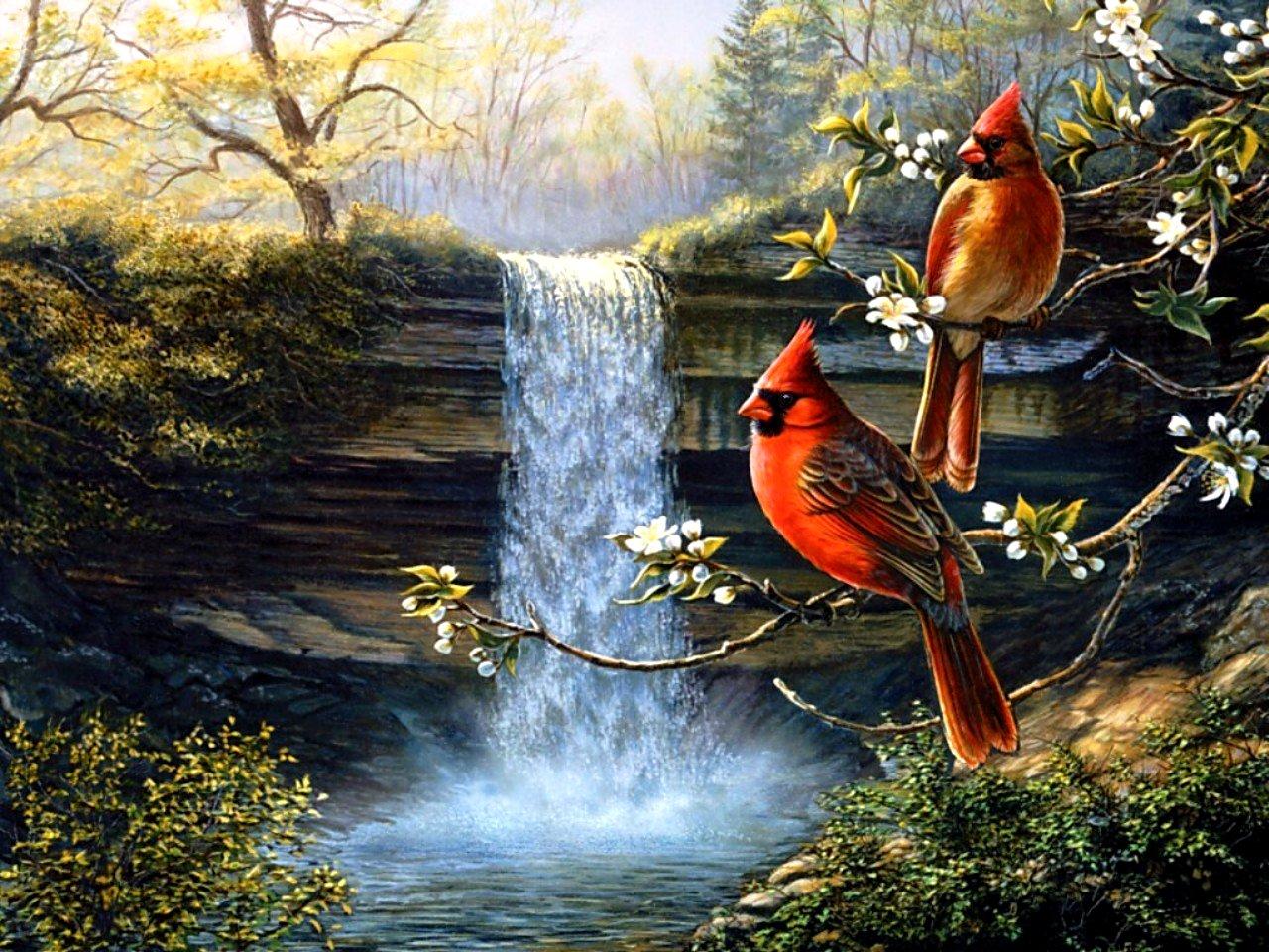Cardinal bird desktop wallpaper wallpapersafari - Winter cardinal wallpaper ...