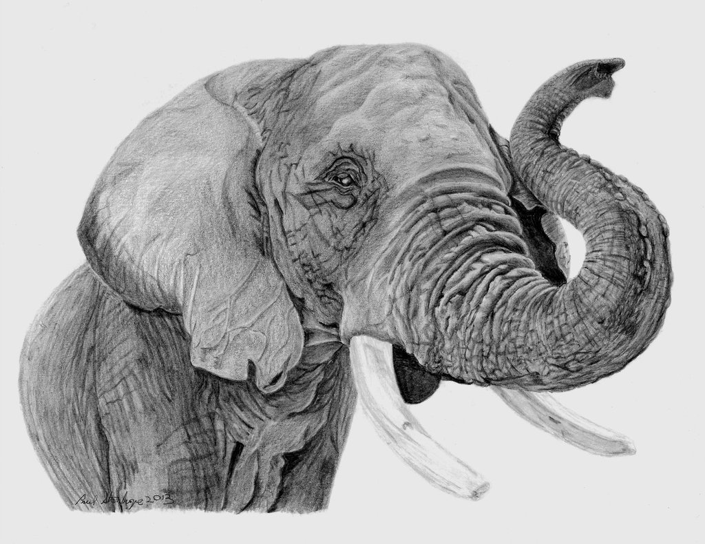 African Elephant Drawing 19568 Hd Wallpapers in Animals   Imagescicom 1024x791