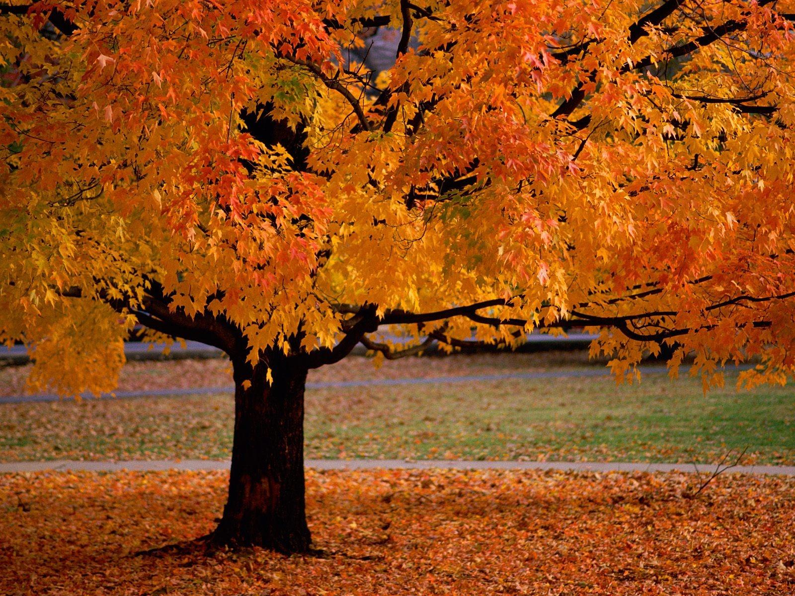 An Autumn Beauty     ID 34533   PREMIUjpg 1600x1200