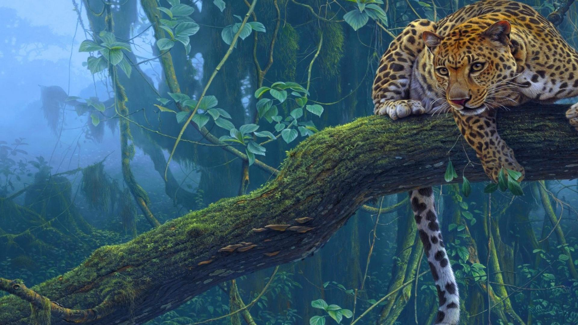 Jaguar desktop wallpaper wallpapersafari - Jaguar animal hd wallpapers ...