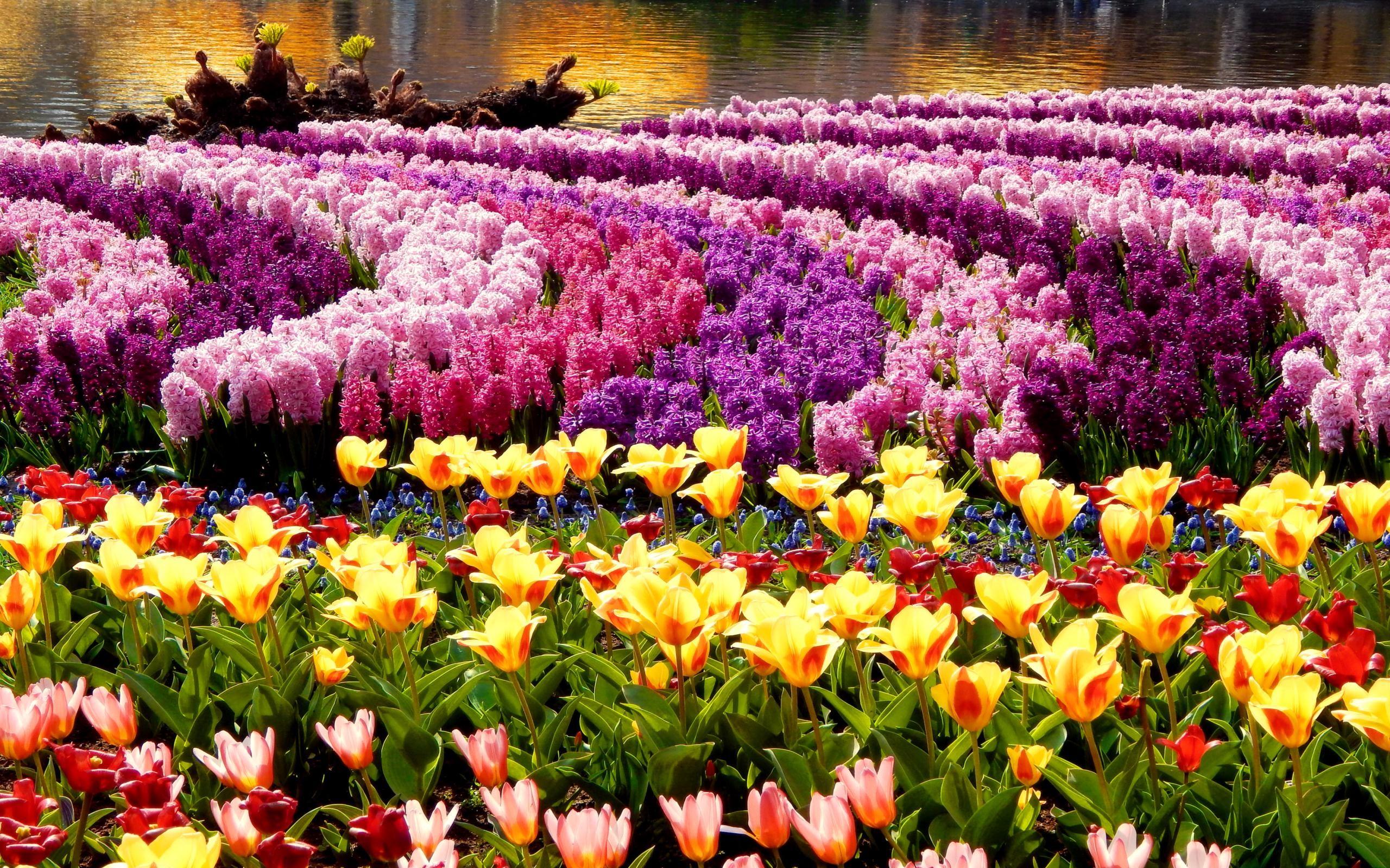 32 Field Of Spring Flowers Wallpaper On Wallpapersafari