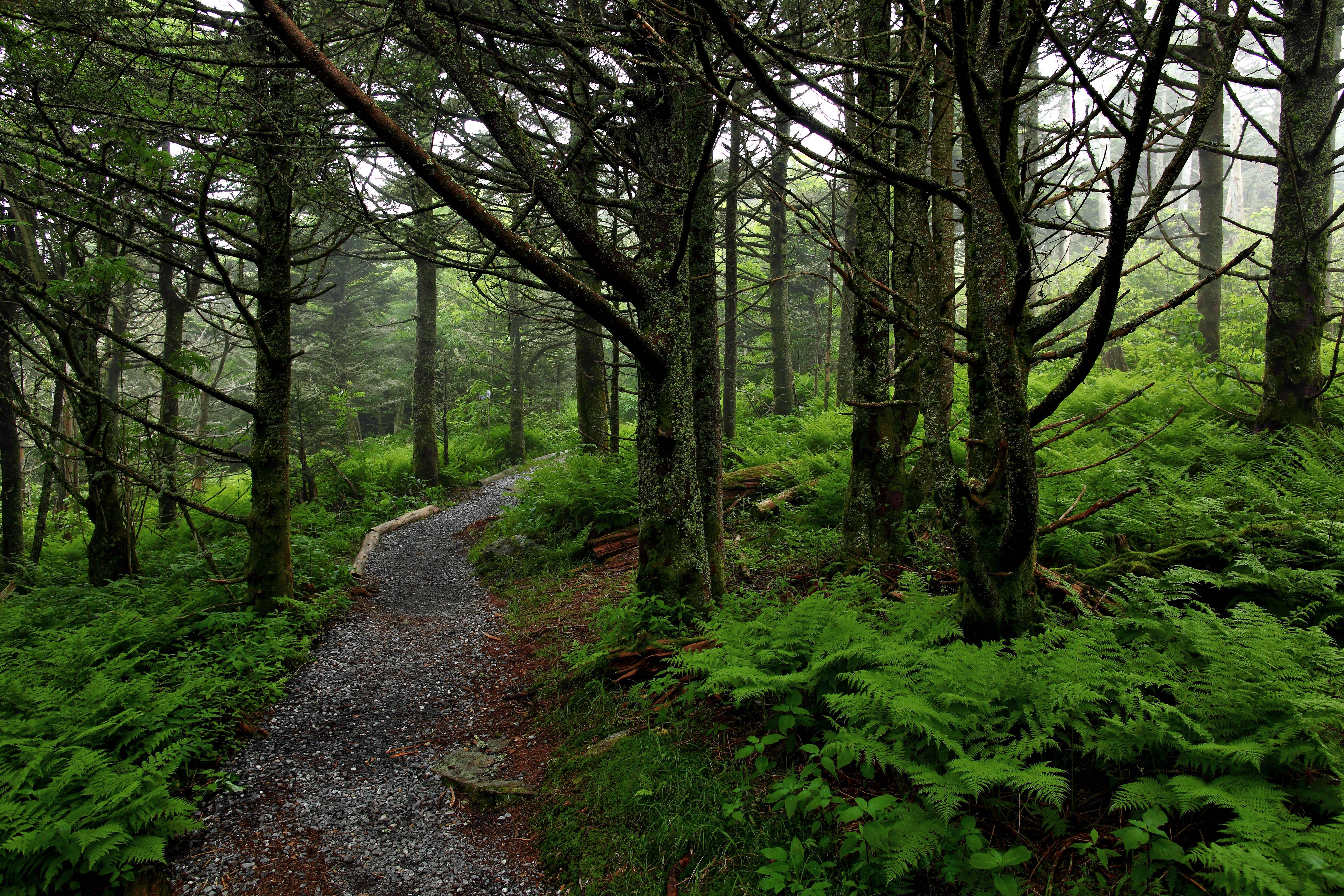 hiking nature wallpaper - photo #26