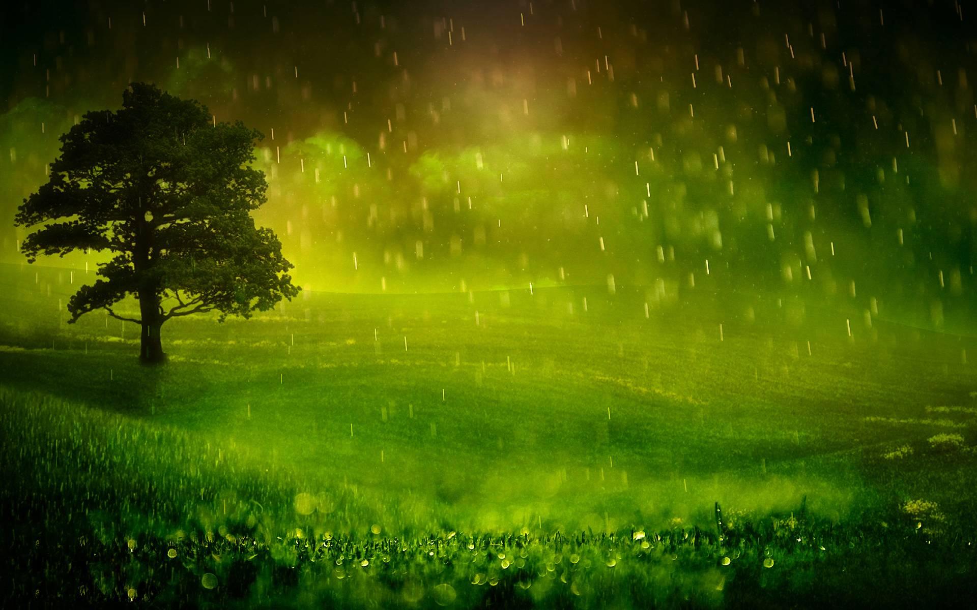 Nature Rain Wallpapers 1920x1200