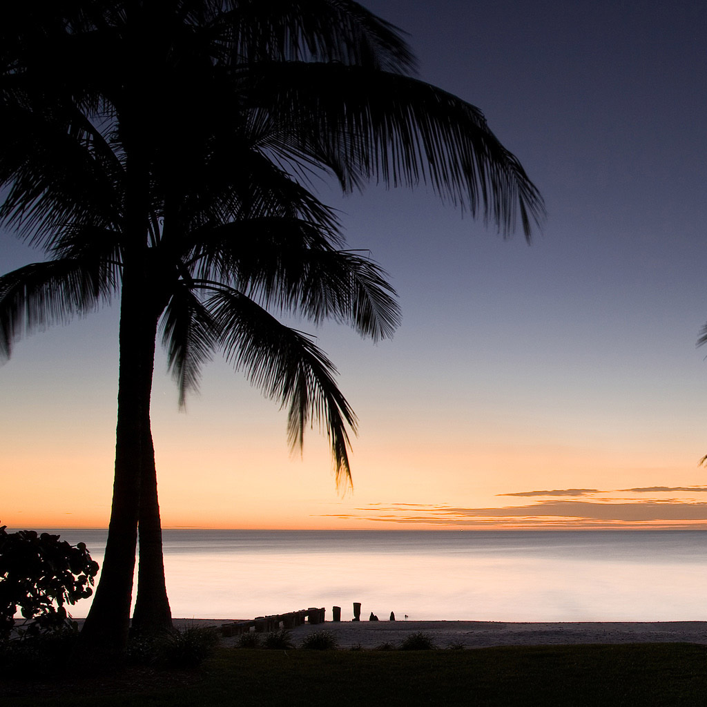 Download Download Palm Tree Sunset Wallpaper 1024x1024