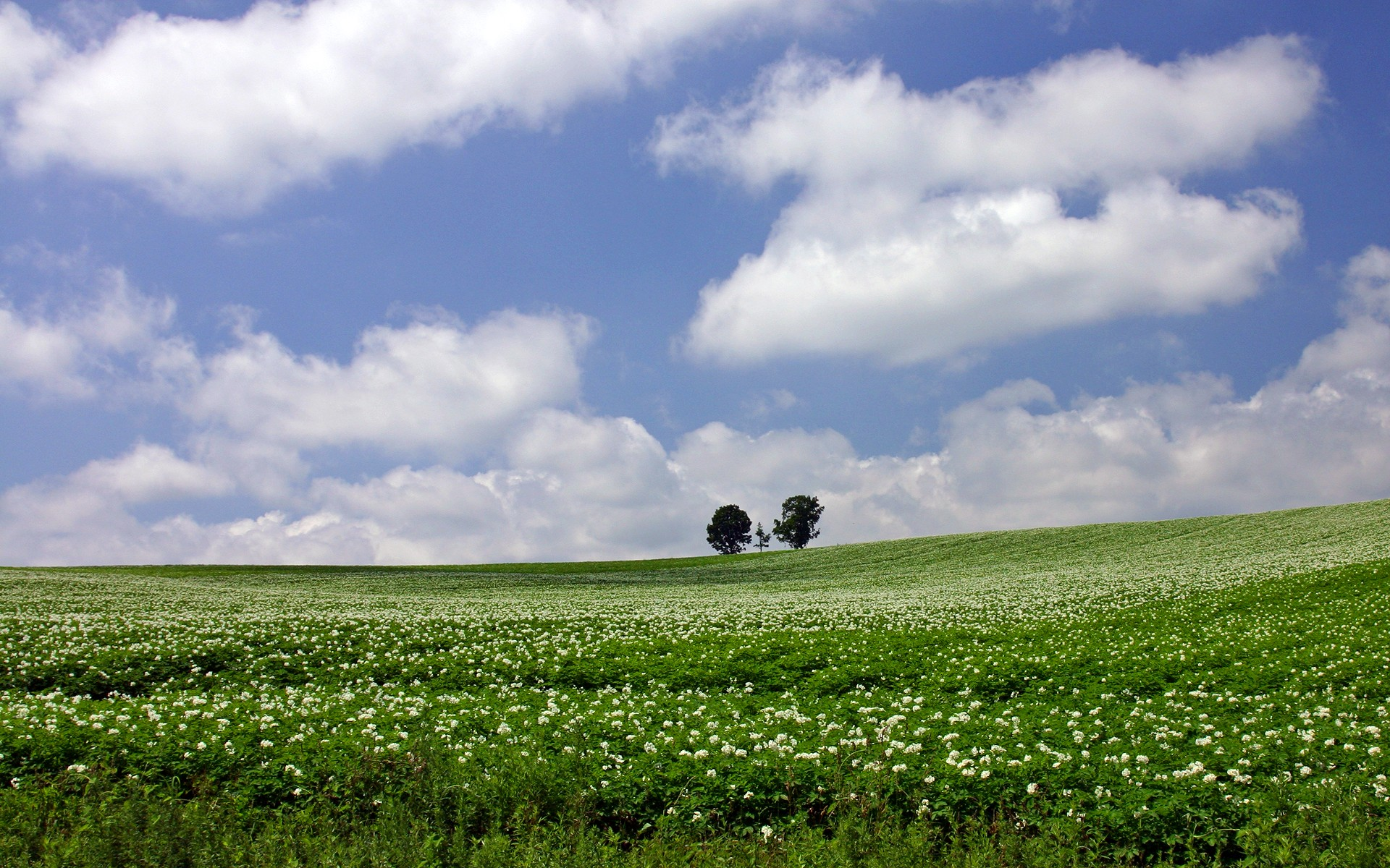 природа поле горизонт  № 3896459  скачать