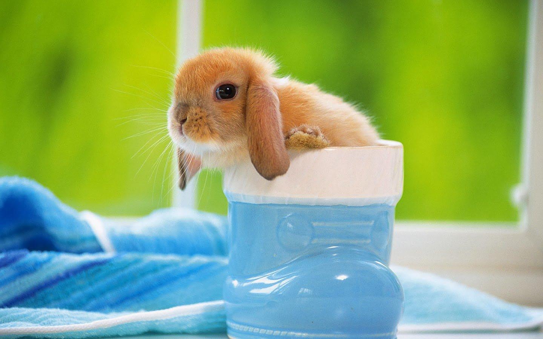 испуганный кролик  № 367690 без смс