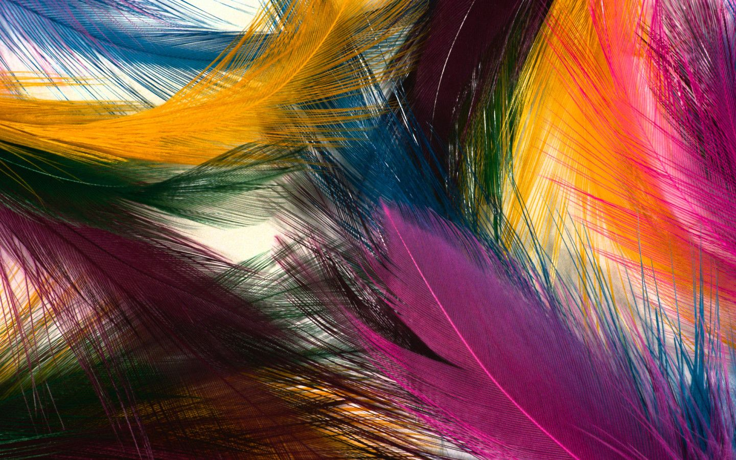 Creative Wallpaper Multi Colored Feathers Colors of The world 1440x900