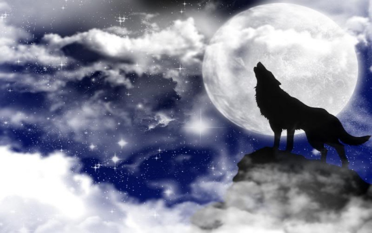 Free Download Wolf Moon Wallpaper 11249 Hd Wallpapers In Animals Imagesci 1280x800 For Your Desktop Mobile Tablet Explore 48 Wolf Moon Wallpaper Wolves Wallpapers For Desktop Wolf Wallpaper 1080p Wolf Wallpaper