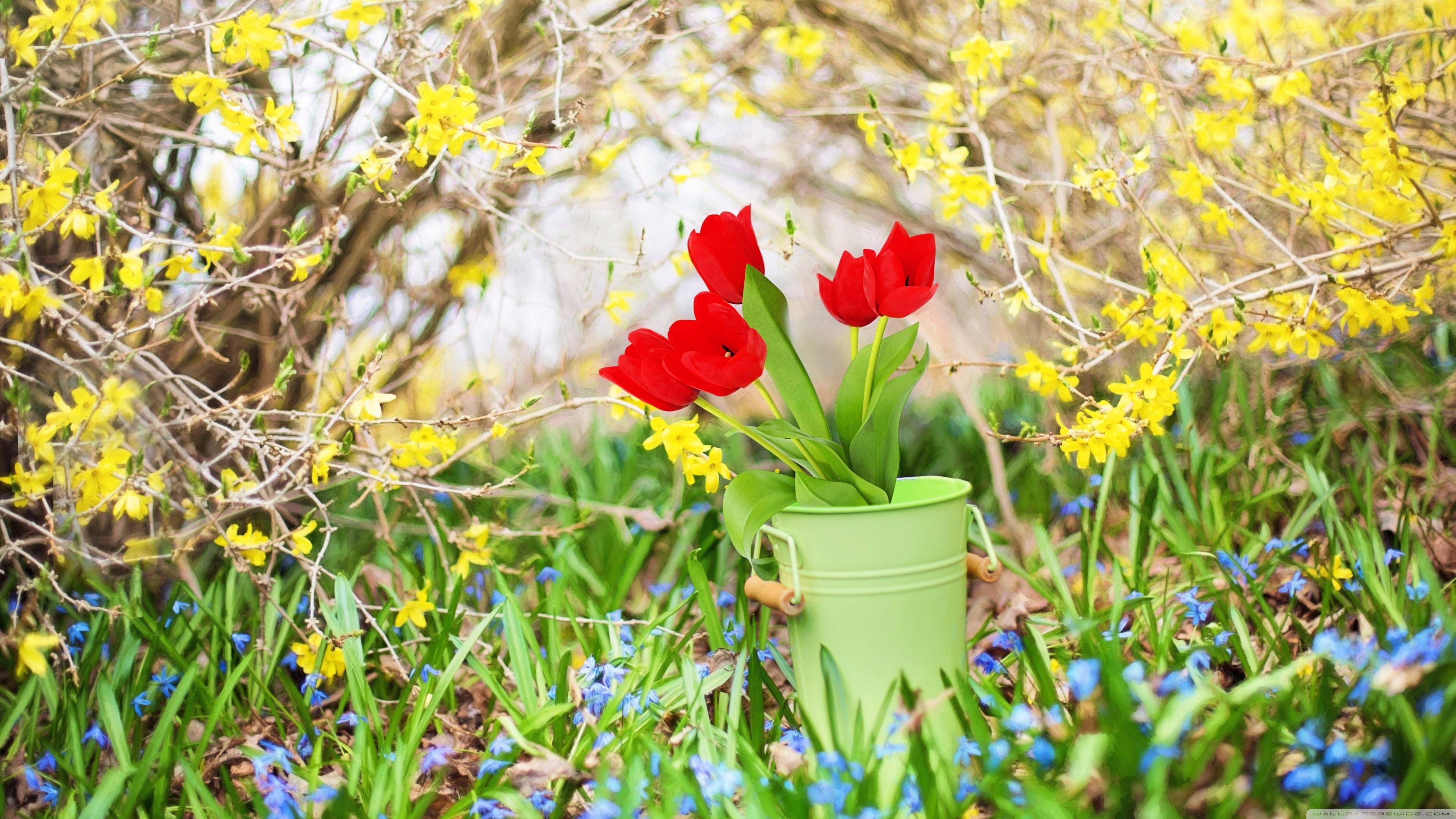 Free Download Spring Background 4k Hd Desktop Wallpaper For