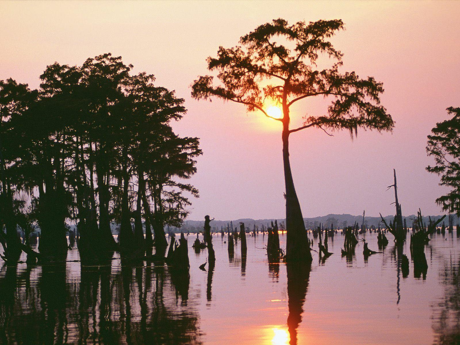 55 Bayou Sunset Wallpapers   Download at WallpaperBro 1600x1200